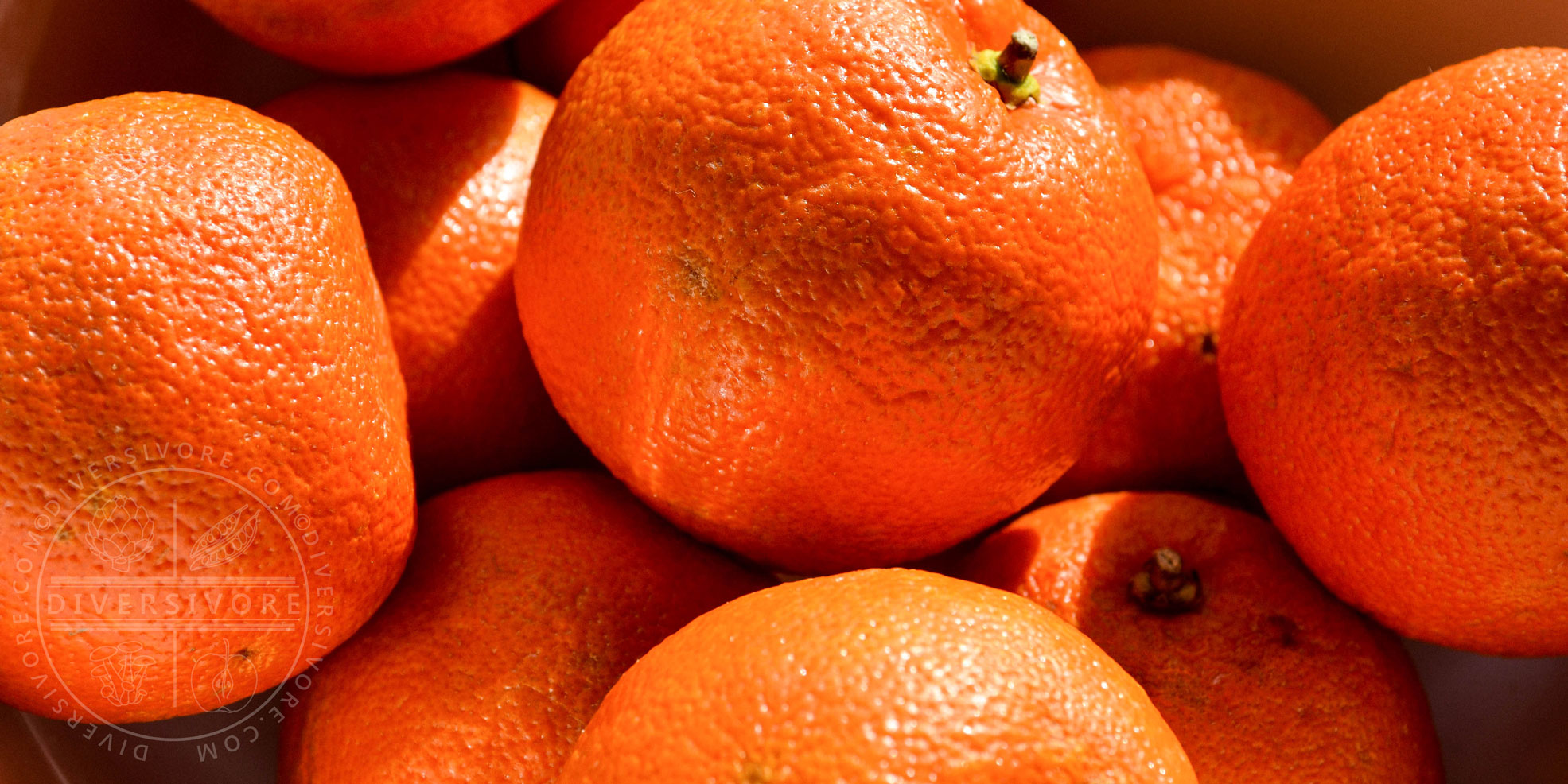 Seville (Bitter) Orange - large header