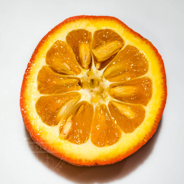 Seville Orange (aka Bitter, Sour, or Marmalade Orange) cross-section - Diversivore.com