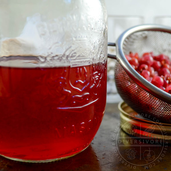Redcurrant gin in a mason jar, shown beside a mesh strainer filled with leftover currants