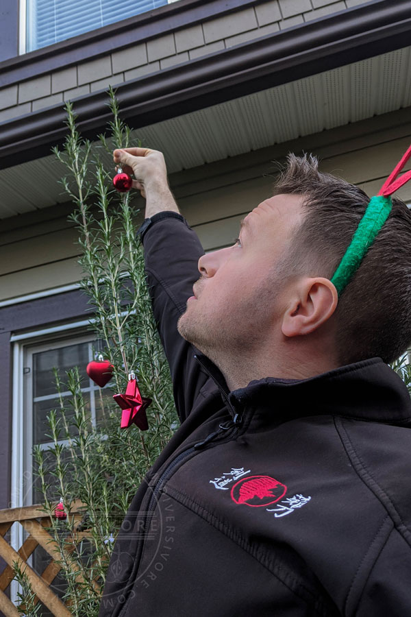 Sean hanging ornaments in his gigantic rosemary bush